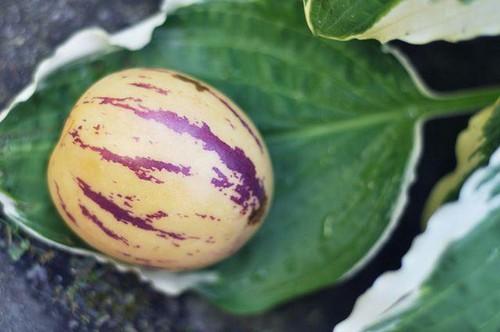 Рамзес фрукт