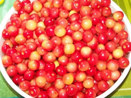 Полезные свойства вишни и черешни