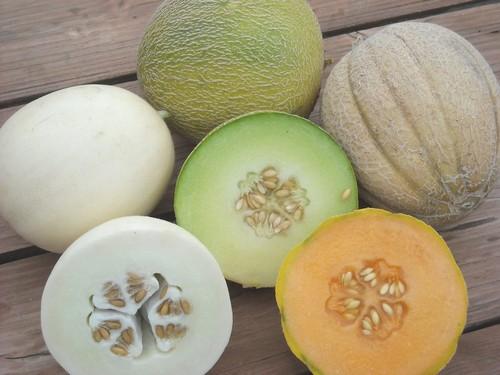 Популярные сорта дыни