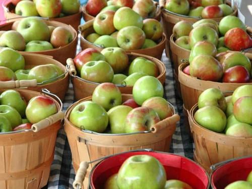 Яблоки Антоновка особенности и описание