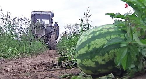 Урожай в Приморье