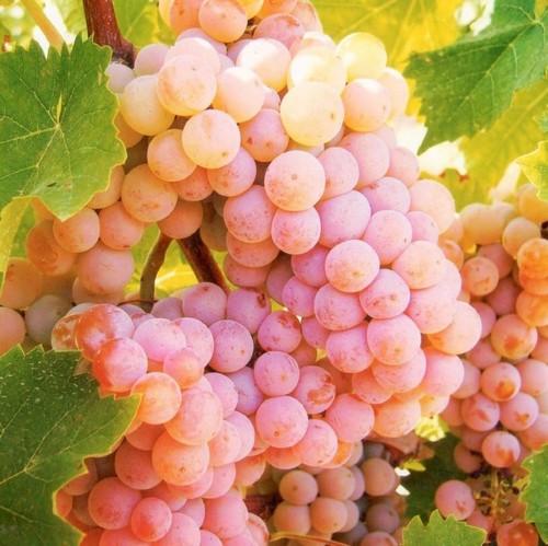 Виноград вкусный