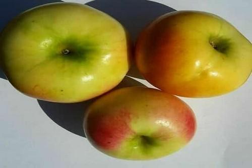 Яблоки Ананас